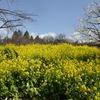 京都府)宇治市植物公園→太陽が丘。ヒヨドリ、モズ、ツグミ、メジロ、エナガ。