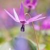 春色パレット~花言葉は....。