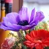 母の還暦を祝う記念のプレゼント【看護師妻】