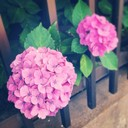 薄花色の休み時間