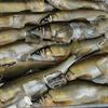 肴ならではの川魚料理 【鮎・あまごフライ】