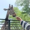 キリンの餌やりに大興奮!大人も子供も楽しめる宇都宮動物園【栃木】