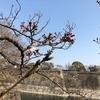 """大阪城の桜""""からの""""スパイスカレー"""
