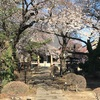 最勝院の桜と旅する板碑「青石塔婆」