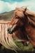 【育毛】フケの出やすい乾燥敏感肌の頭皮におすすめなスカルプシャンプー「ウーマシャンプー(U-MA)プレミアム」
