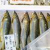2020年8月28日 小浜漁港 お魚情報