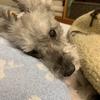 #愛犬のお留守番の動画・・・泣けました。💦