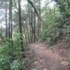 勝俣部長の「高尾登山と健康体質作り」647・・・・幻想的 コントロール曲