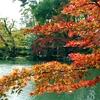 兼六園紅葉