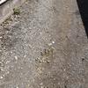 藤沢市の危険ブロック塀等安全対策工事費補助制度について