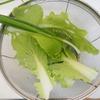 プランター菜園 ネギ・白菜 勝手に育ってらくちんらくちん♪ 手抜き料理を作る!