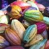 「柿の種チョコ」!!チョコの中に柿の種が埋まっている!?