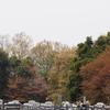 霊園風景その78 「‥桜散り 緑映え」