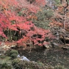 「蓮華寺」の池泉回遊式庭園に映る華やかな紅葉