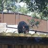 多摩動物公園でタスマニアデビルとチーターの子供たちに会ってきた