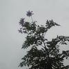 今日は曇りそして雨