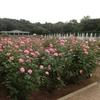 神代植物公園のバラと今年のプロ野球