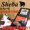 シーバの【とろ〜り香りのまぐろ味】を猫3姉妹に与えたら大絶賛!ちゅーるより・・!?