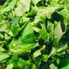 クックパッドにもない!かき菜のレシピを一部紹介