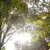 2021年9月23日 秋分の日 陽の光