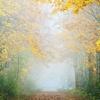 RE 虫の音は止まない夏の道脇に 冷たい霧を漂わせる人