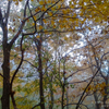 08 透き 通る  秋