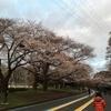 5km全力と桜