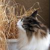 O次郎 猫草のグルメ