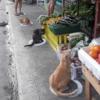 猫もソーシャルディスタンス!? とある人間より賢い子たち