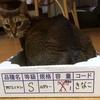 【猫さんと暮らす】きーたんの家族記念日【猫暮らしの始まり】