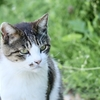 田代島(猫島)の見どころ紹介!〜猫だらけ,猫づくし,猫まみれ〜