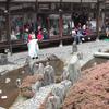 【ひな祭り】桃の節句行事がある京都の観光スポット3選