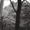 Leica Dlll + YASHIKOR 50mm F2.8 (クセノタール型)