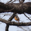 県民の森(宮城県利府町)で、色々な野鳥を撮影。2/27、その2