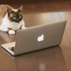 ブログ書いててなんになるんですか?