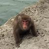 ナイストリップ!宮崎県串間市の幸島(無人島の猿島)に行ってきたよ