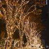 【夜景】11月にしてすでにクリスマスツリー!?続編パート3