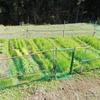 久々更新、11月の畑の様子。