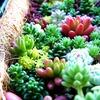 有賀拓郎の心を癒す多肉植物