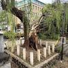 滞在中に巨大台風21号が京都を直撃!! 体験してわかったこと