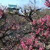 大阪城梅林の開花状況