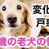 15歳の老犬になった愛犬の悩み