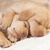 睡眠不足に氣付いていない人の「エネルギー低下」のリスク