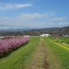 ミモザ・ガーデンの日記 河津桜見物