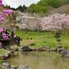 桜めぐり(6) 新緑も爽やかダム公園…