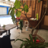 東京から2時間のリゾート 熱海「guesthouse MARUYA」