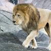 動物園や水族館で働く動物飼育員になるためにはどうすればいいの?必要なスキルや就職する方法を紹介