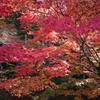 京都(粟田山荘)