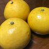 【土佐文旦(ぶんたん)は室内で香りを楽しめる柑橘でグレープフルーツより爽やかな苦味?】
