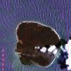 H290610ランドサット8の捉えた西之島